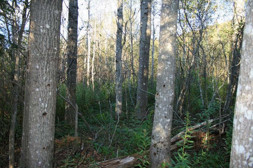 Hardwood And Softwood Trees ~ Canadian land for sale in ontario nova scotia and new